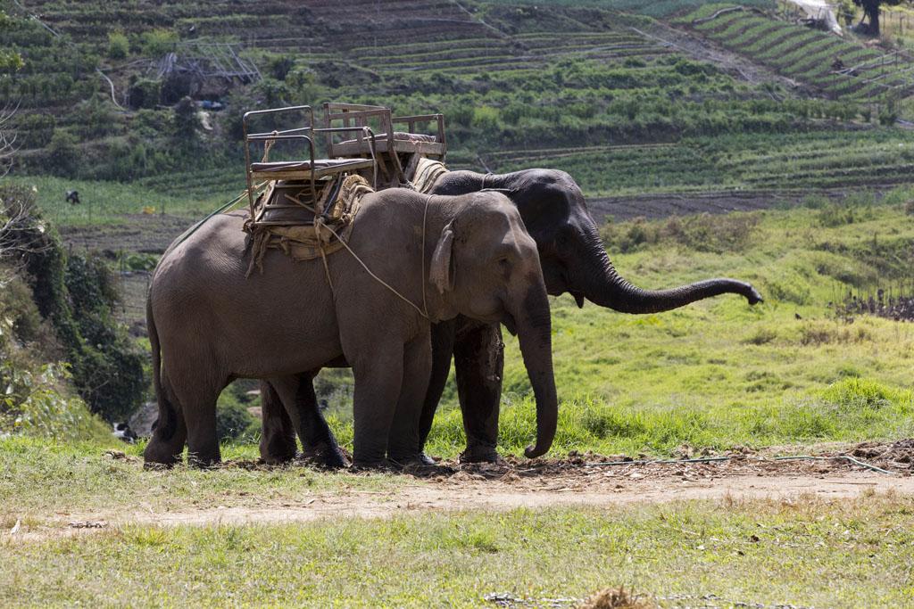 Northern Thailand Photo-Tour & Adventure- Picture Pauli Djurholm